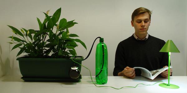 Natural Fuse : la plante fusible